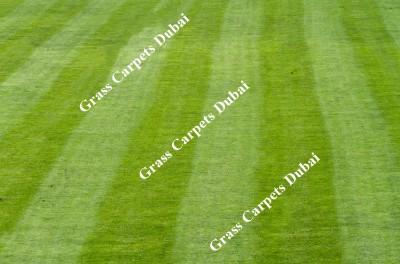 landscaping grass2