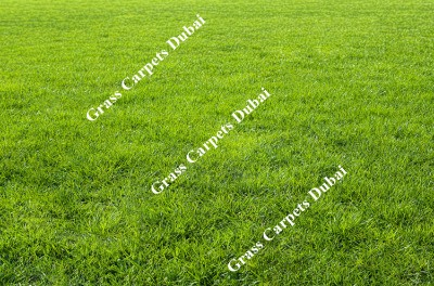 landscaping grass3