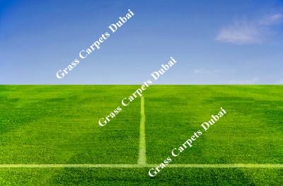 landscaping grass4