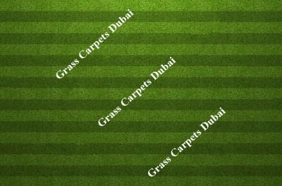landscaping grass6