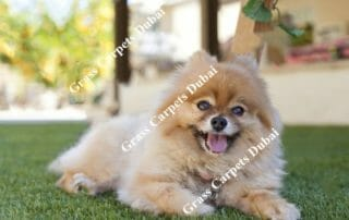 Grass for Dogs