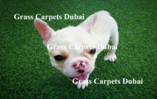 Pet Friendly Artificial Grass