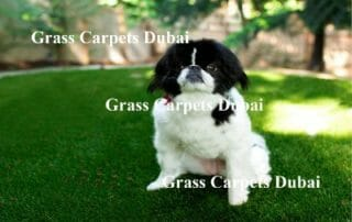 Buy Synthetic Grass For Pets