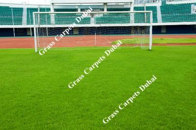 sports grass2